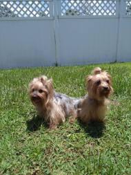 Cocoa and Lola